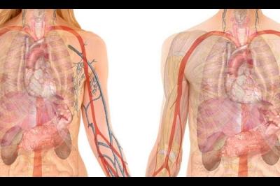 Red Biot, ingeniería de órganos y tejidos