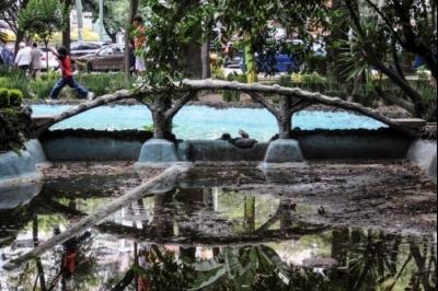 UNAM realizará censo de árboles en la Cuauhtémoc