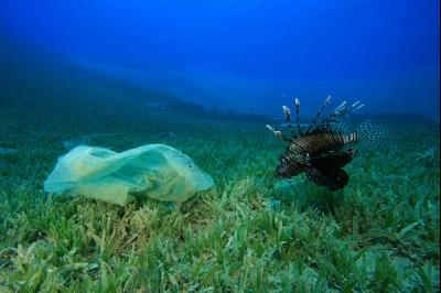 ¿Está sucediendo una sexta extinción masiva en los océanos?